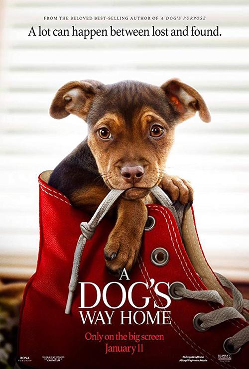 ดูหนังออนไลน์ A Dog's Way Home (2019) เพื่อนรักผจญภัยสี่ร้อยไมล์เต็มเรื่อง HD มาสเตอร์ ดูหนังฟรี ดูหนังใหม่